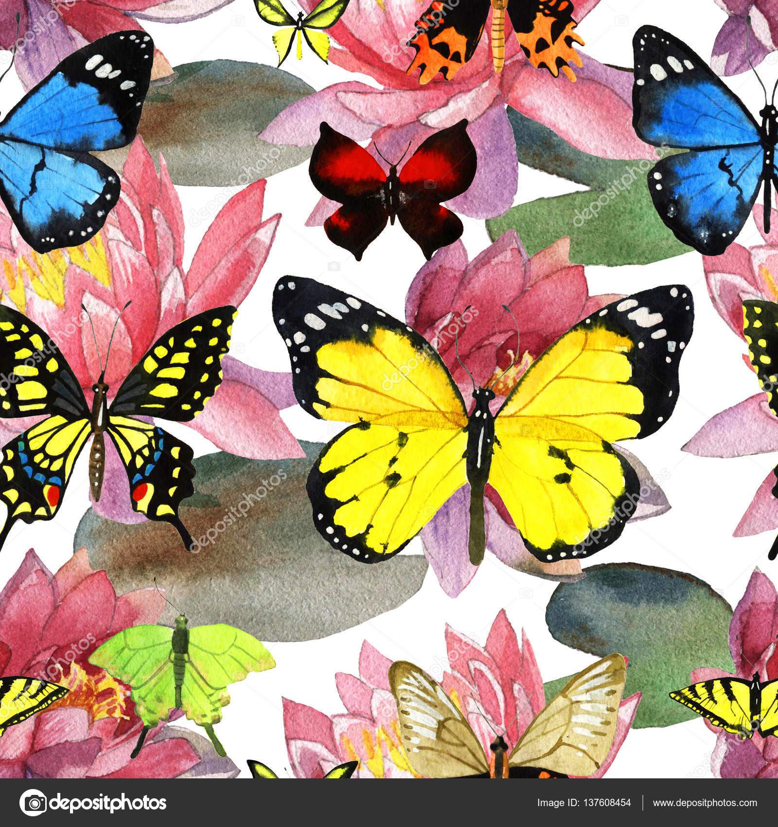 Dibujos Flores Y Mariposas Pintadas Patrón Mariposa Acuarela