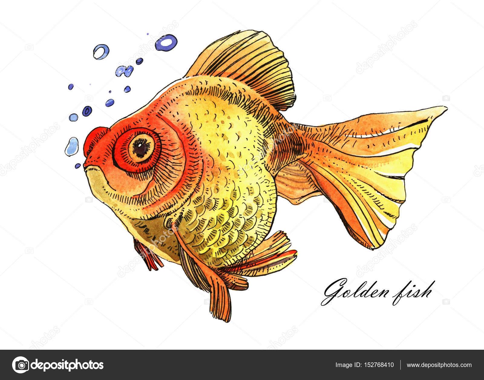 Dibujos Acuarelas Para Pintar Pez Dorado Acuarela Mano Pintado