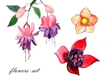 watercolor spring flower illustration isolated on white background. fuchsia and hellebore flower.