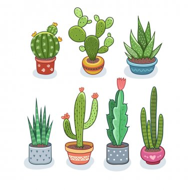 Cactus and succulents in pots. Vector illustration isolated on white