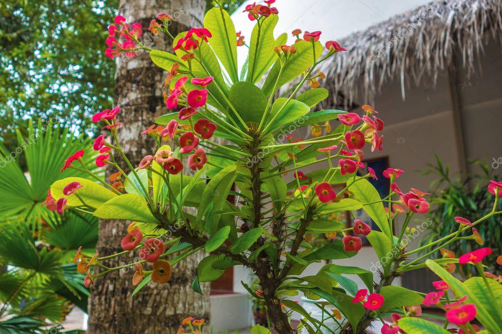 unusual red tropical flower