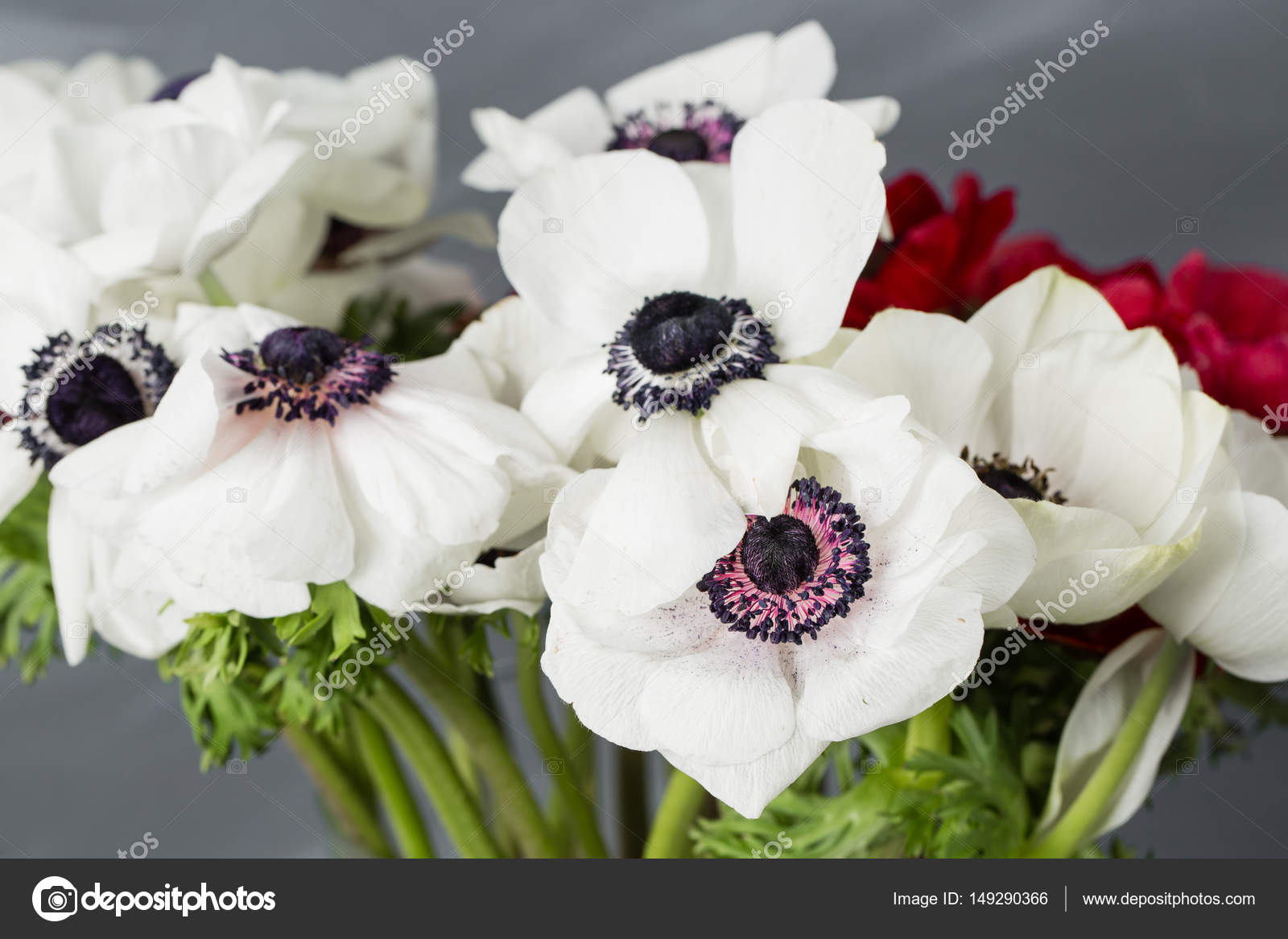 Close Up Of A White And Red Poppies Anemones In Vase Many Flowers