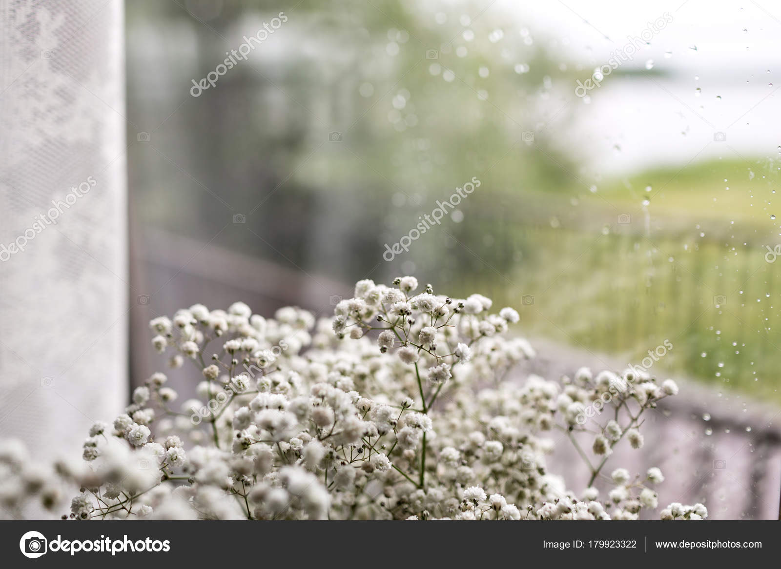 Small White Flowers On A Window Background Soft Home Decor White