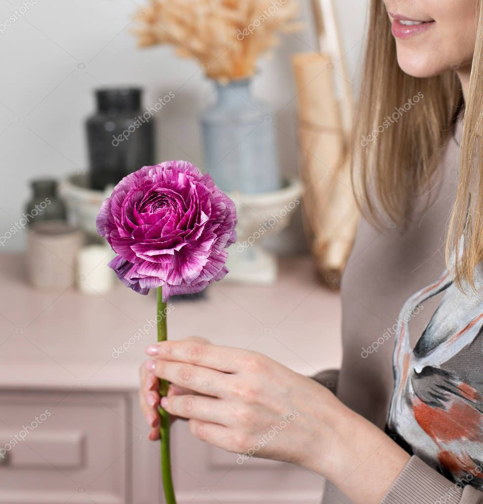 Delicate female hands holding a purple ranunculus flower. Pink chest of drawers in the background. Flower shop, a family business.
