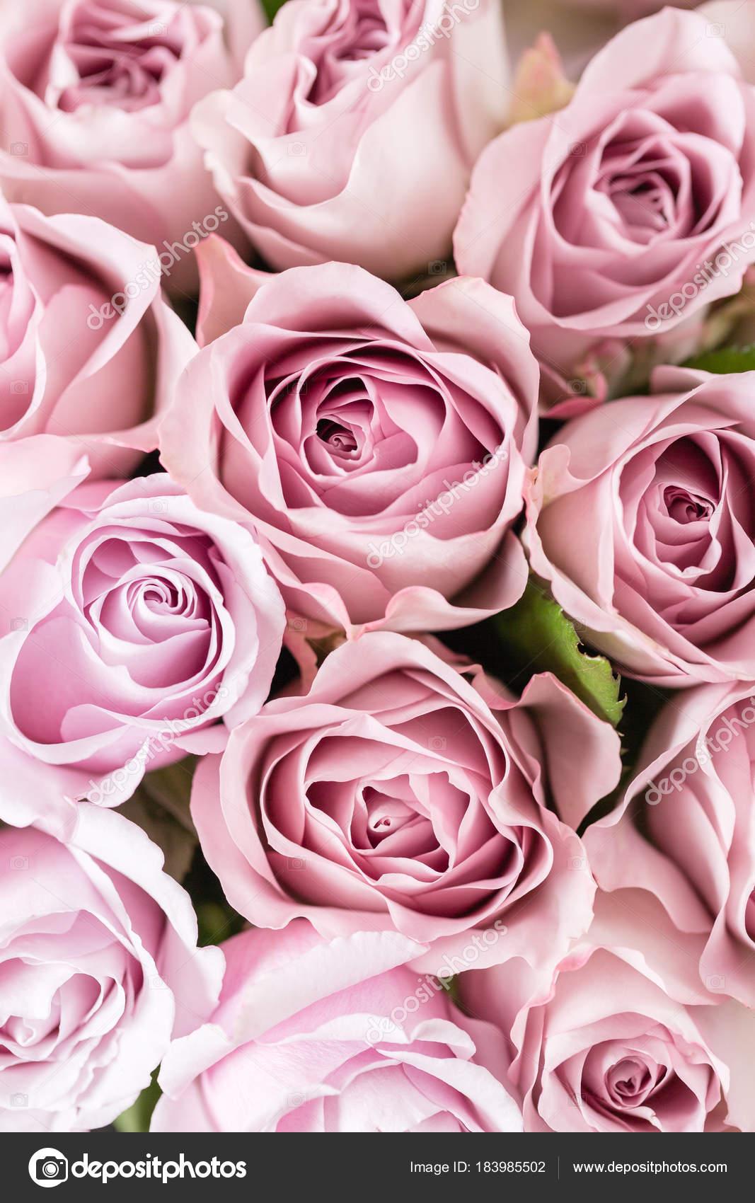 Lila Rose De Jardin Bouquet De Fleurs De Roses Dans Un Vase De
