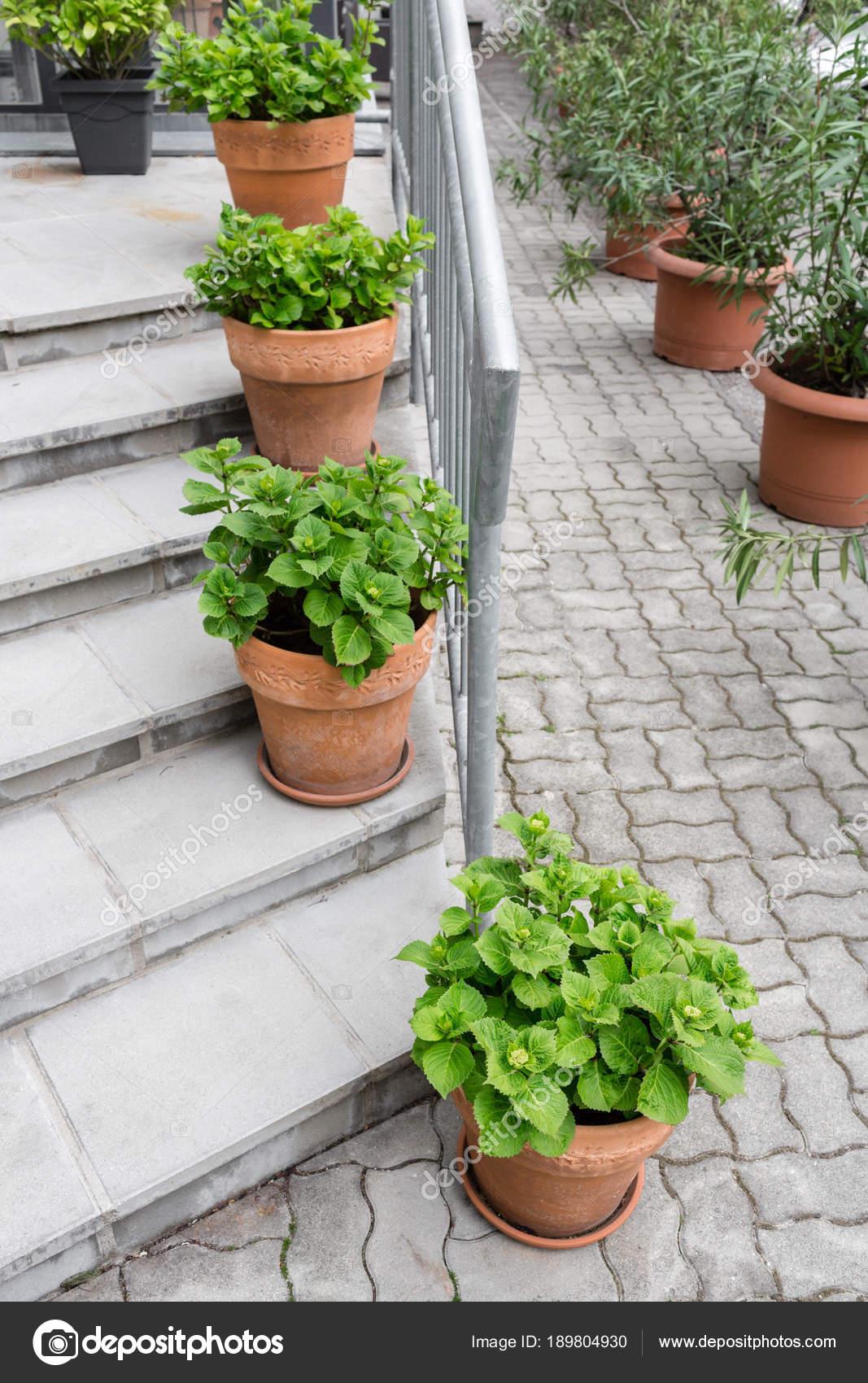 plantes vertes en pots ext rieur sur le patio jardin d. Black Bedroom Furniture Sets. Home Design Ideas