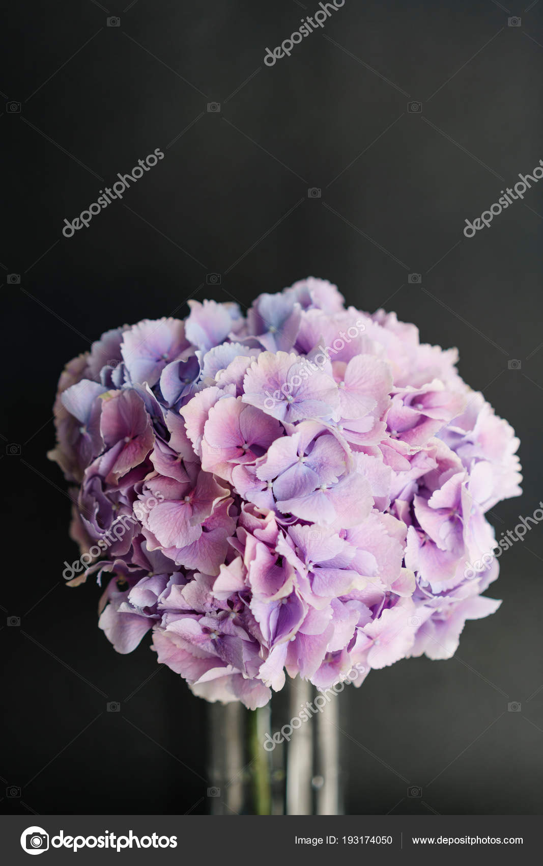 Hortensja Piękne Kwiaty W Wazonie Na Stole Bukiet Z Jasny