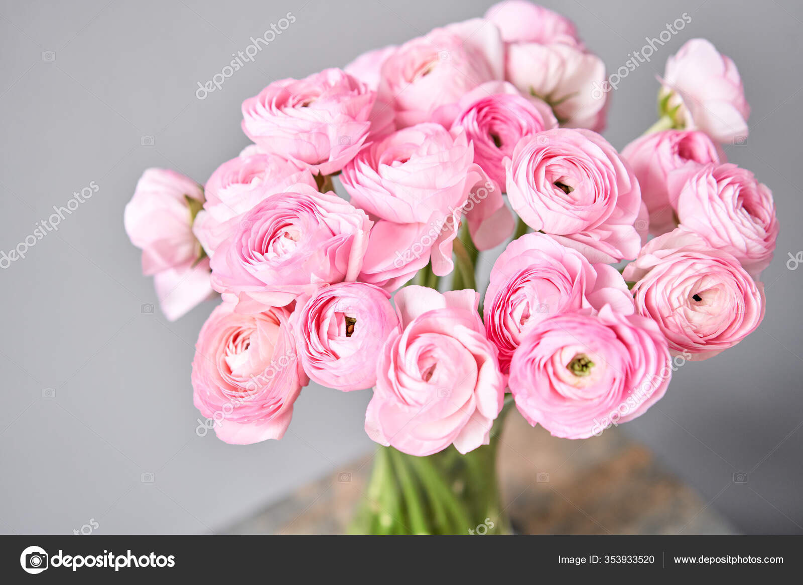 Spring Background Flower Wallpaper Persian Buttercup Bunch Pink