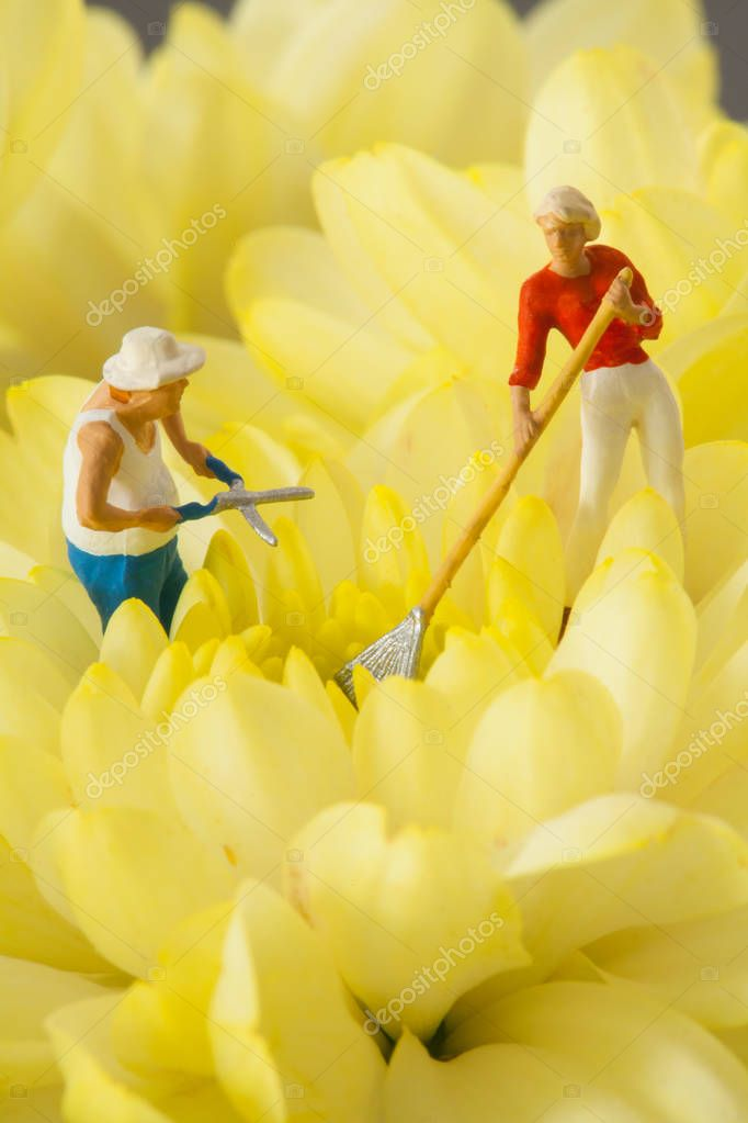 People are gardening in a field of yellow flowers