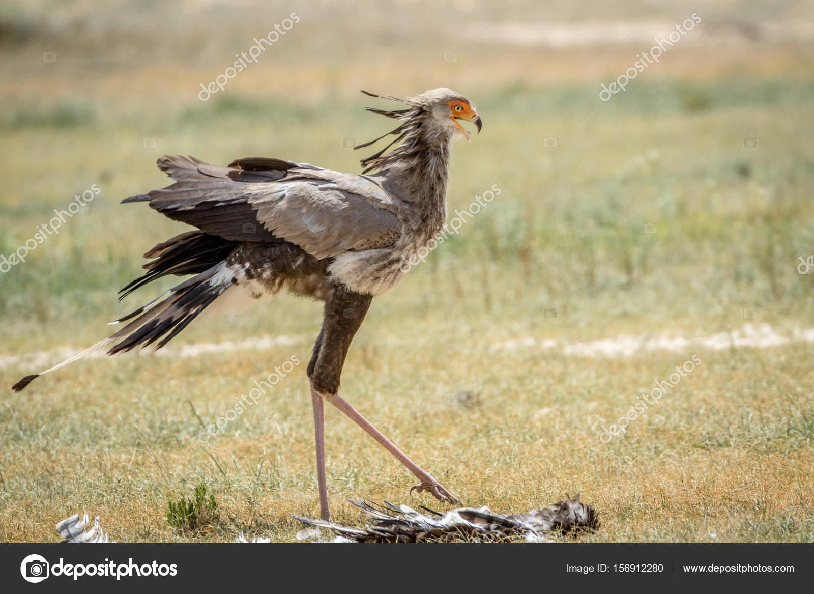 Sekretärin vögeln