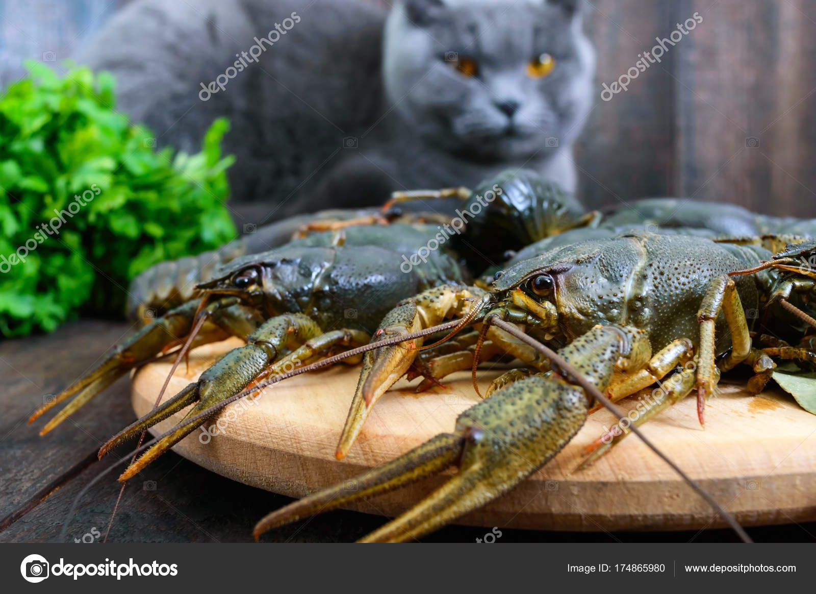 Live Crawfish Wooden Tray Foreground Gray Cat Looking Fresh