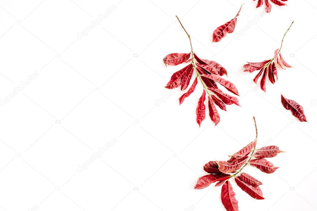 red leaves on white background