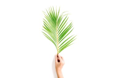 beautiful palm branch in girl's hand