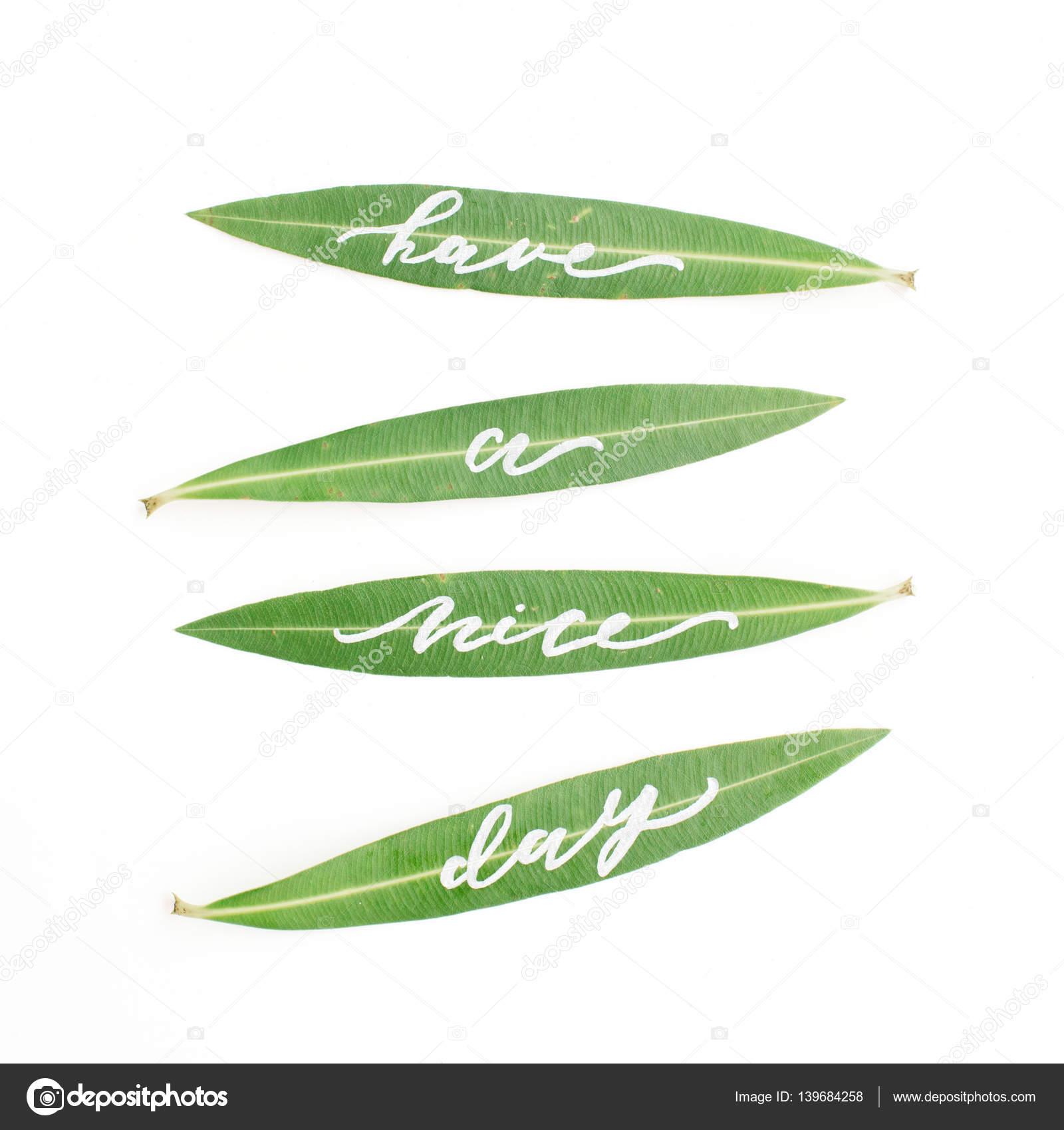 Kalligrafische Woorden Have A Nice Day Geschreven Op Groene