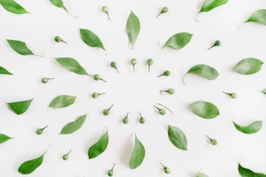 Frame wreath of green leaves