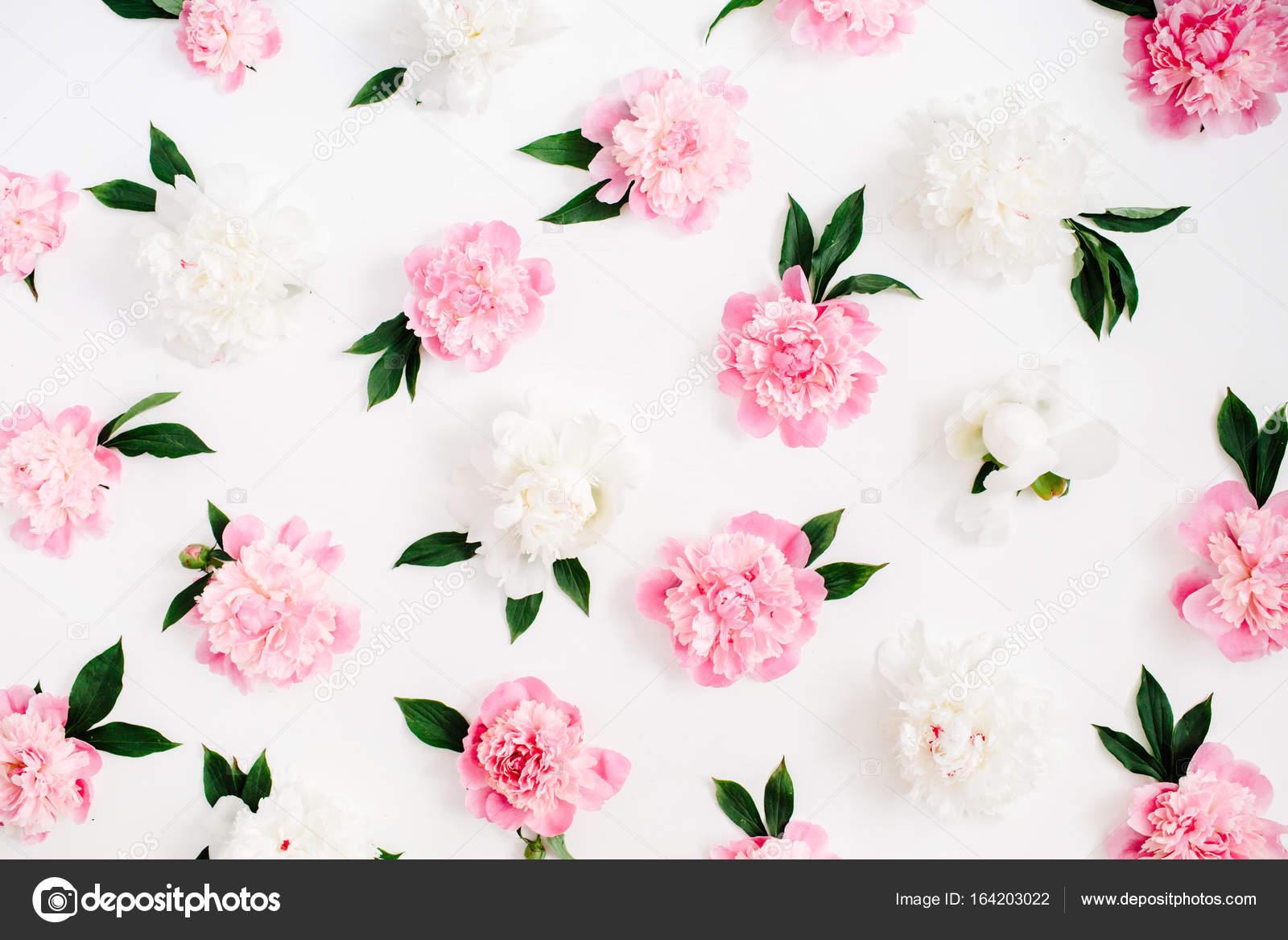 blumenmuster rosa und wei e pfingstrose blumen stockfoto maximleshkovich 164203022. Black Bedroom Furniture Sets. Home Design Ideas