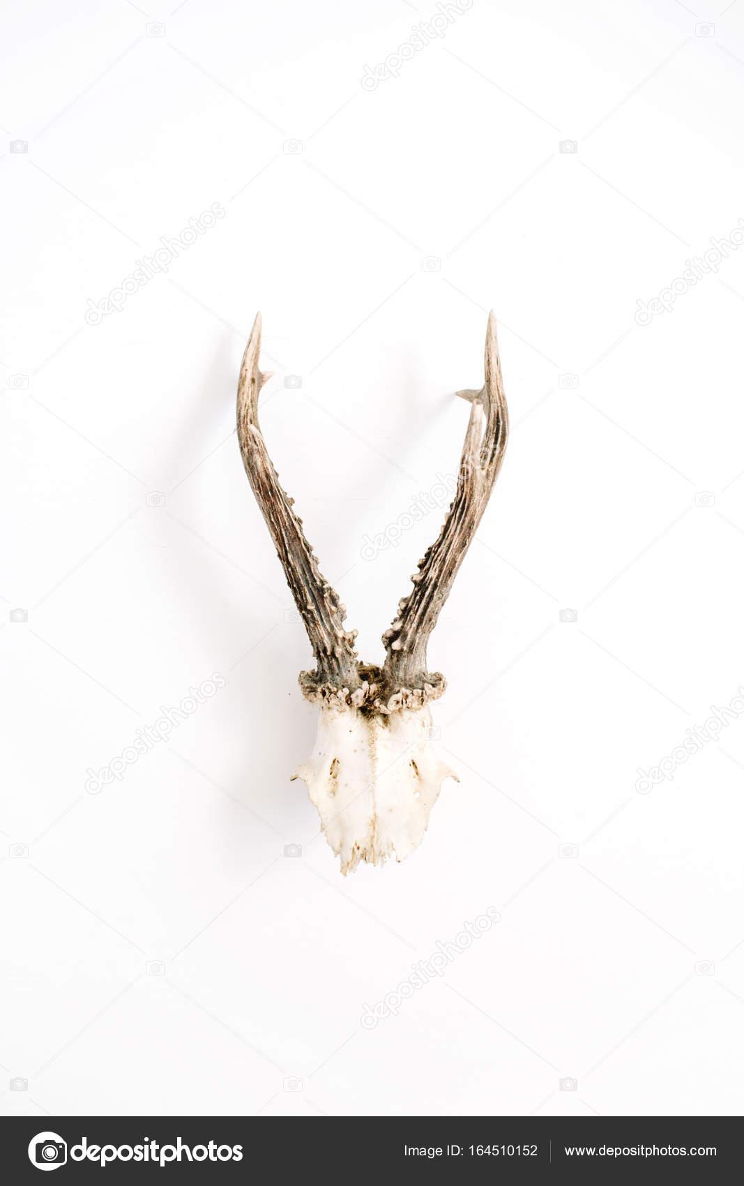 Cuernos de cabra sobre fondo blanco — Fotos de Stock ...
