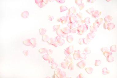 Pink rose petals pattern
