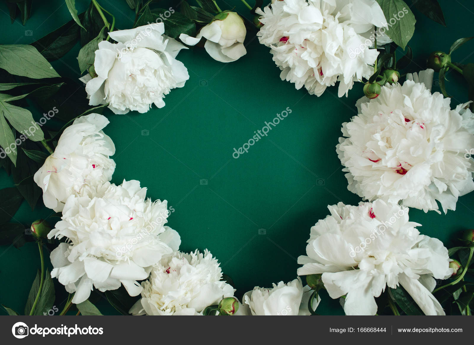 Pattern Made Of White Peony Flowers Stock Photo Maximleshkovich