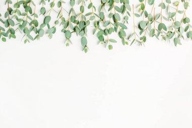 Eucalyptus branch on white background. Flat lay, top view blog, website or social media hero header.