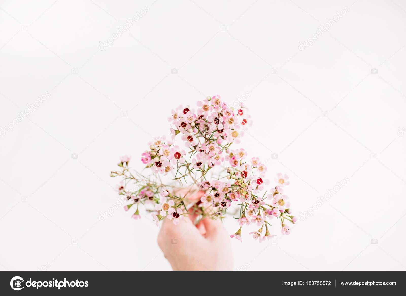 Mão Mulher Segura Ramo Flores Silvestres Fundo Branco Fundo Floral