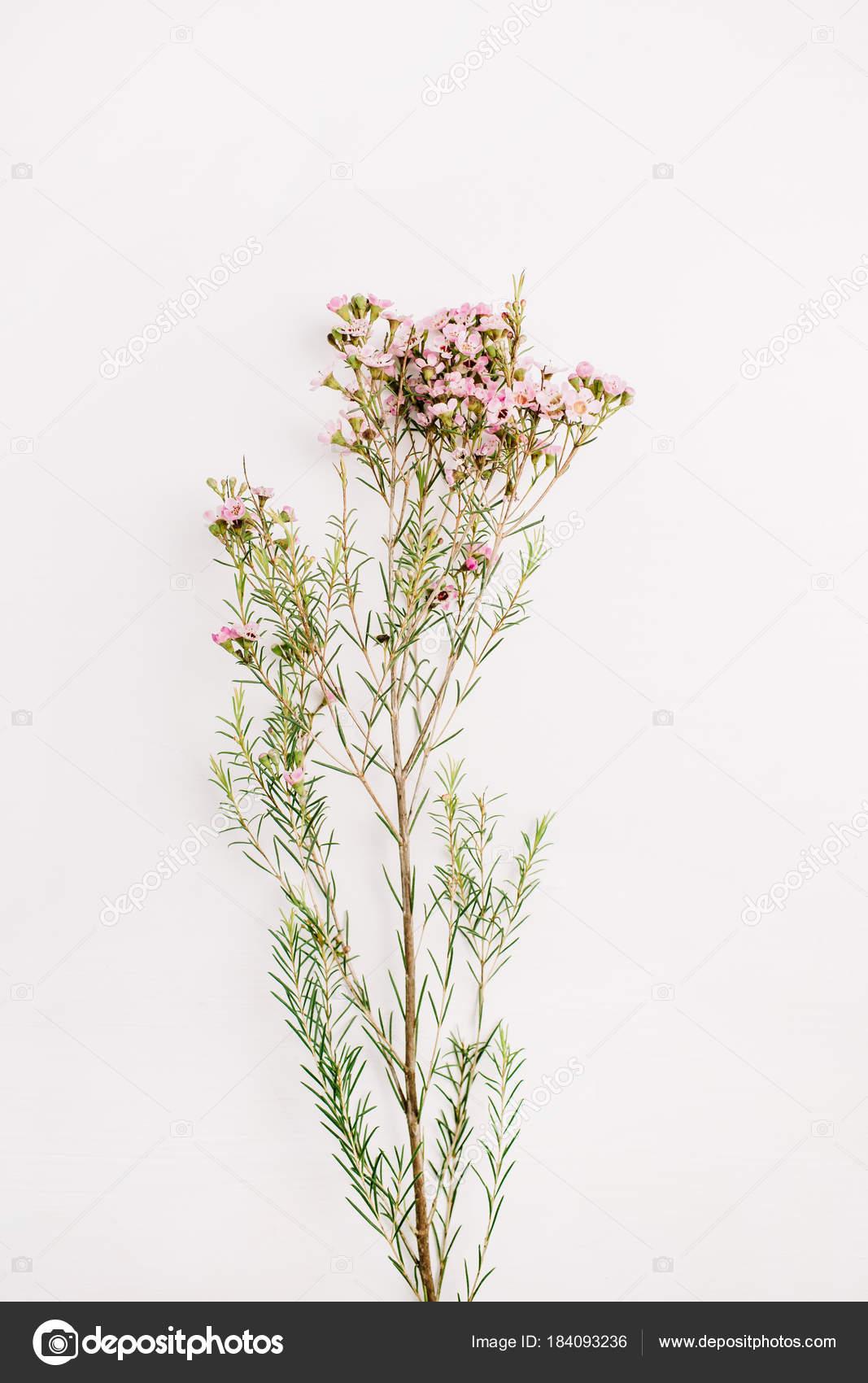 Ramo Flores Silvestres Fundo Branco Composição Floral Vista Plana