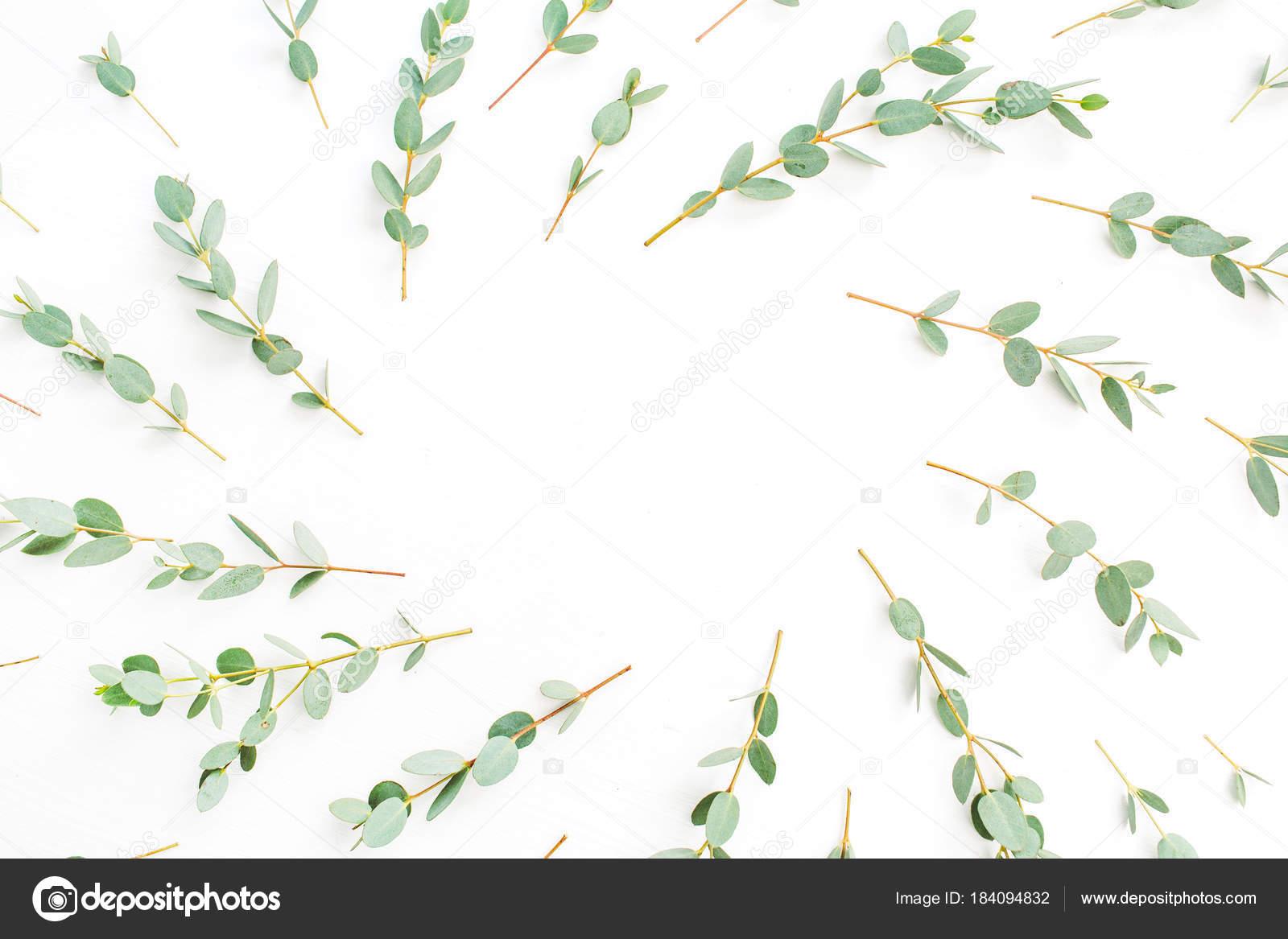Rahmen Des Eukalyptus Zweig Muster Mit Platz Für Text Auf ...