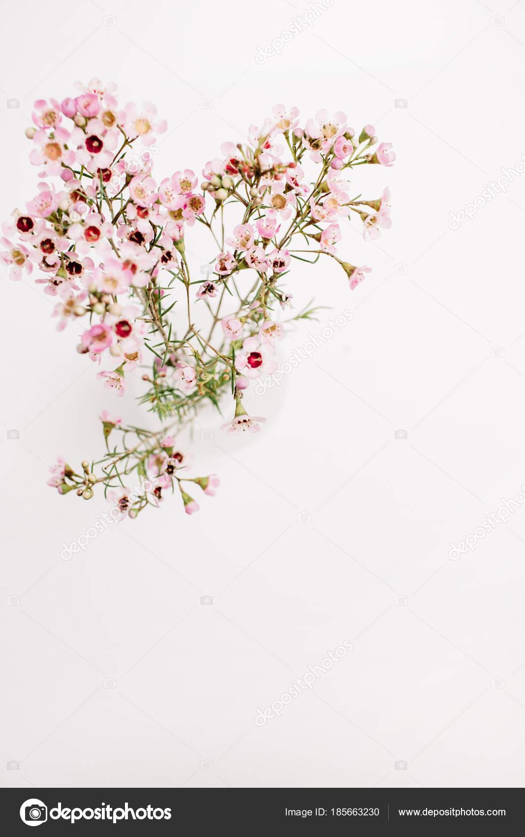 Ramo Flores Silvestres Fundo Branco Vista Superior Plana Leiga