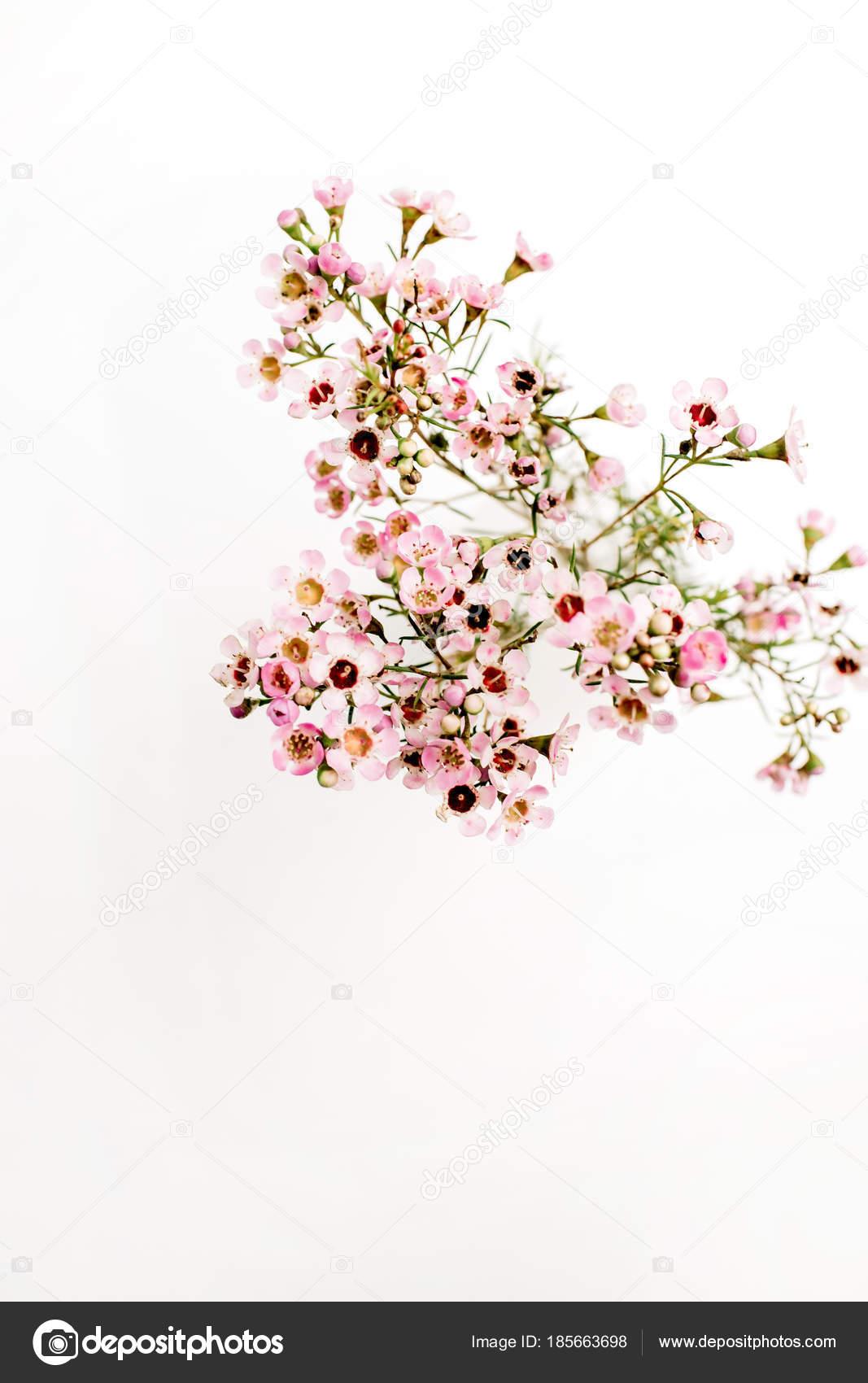 Ramo Flores Silvestres Fundo Branco Ver Cima Stock Photo