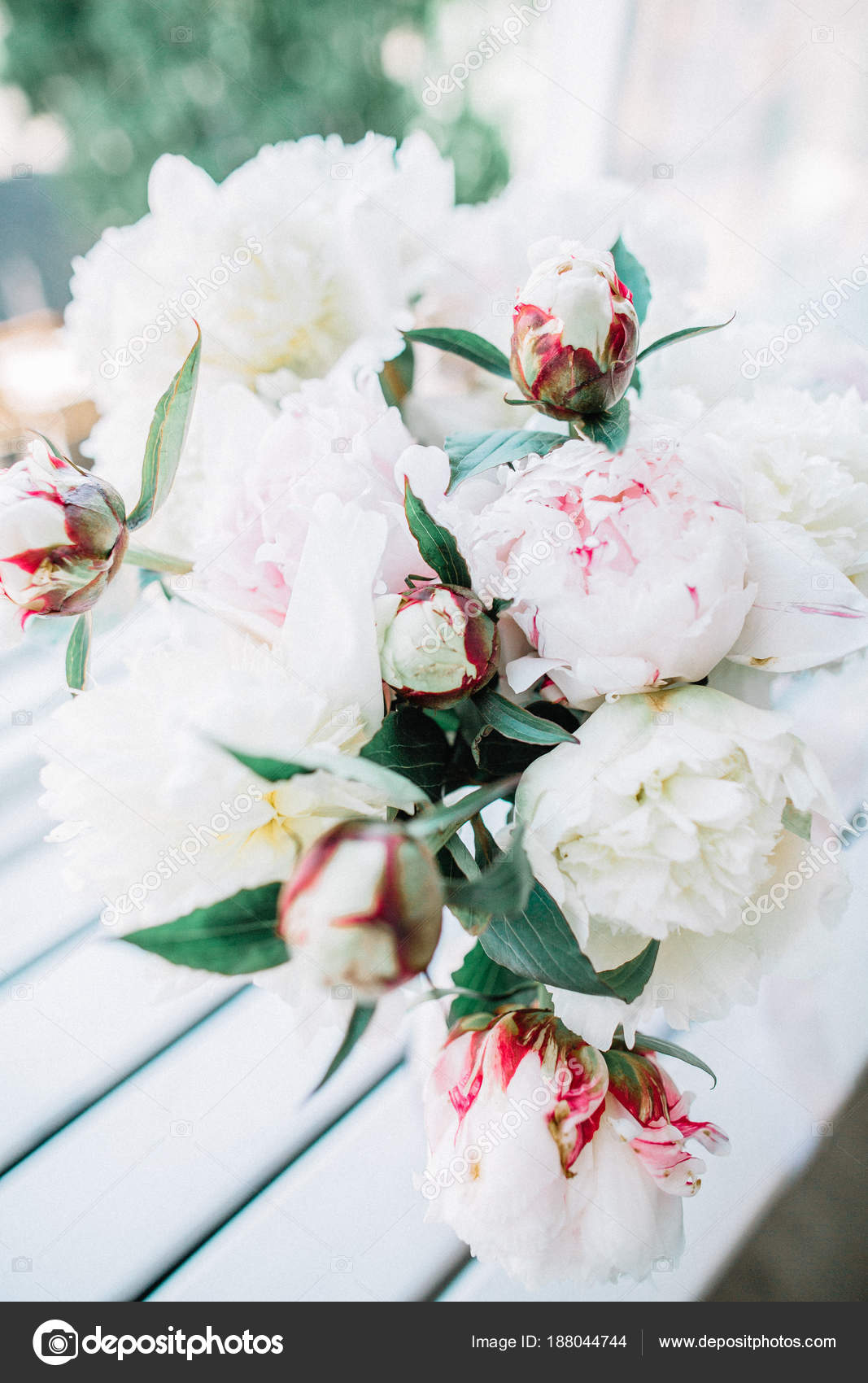 White Pale Pink Peony Flowers Bouquet Stock Photo Image By C Maximleshkovich 188044744