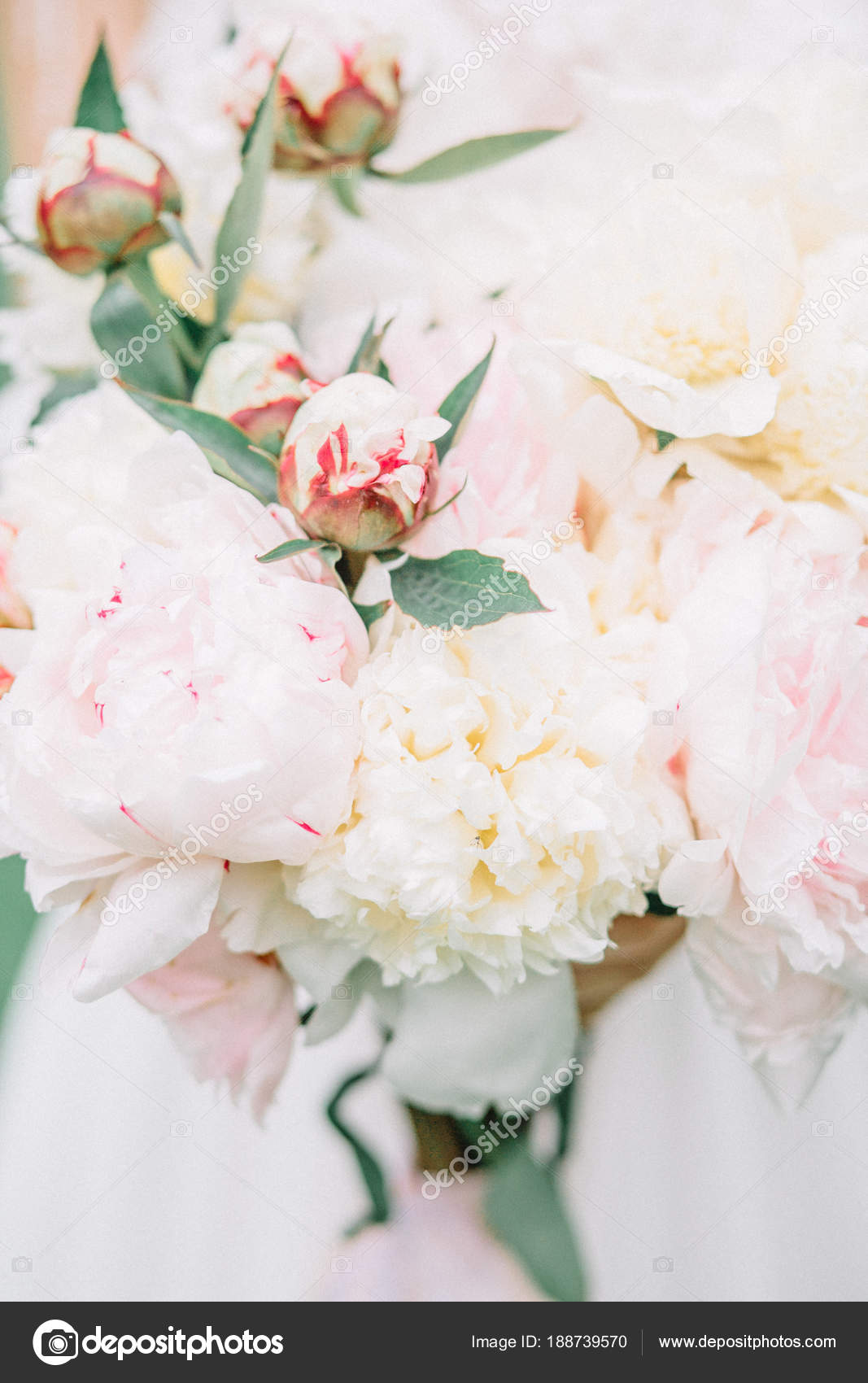 Beauty Wedding Bouquet Pink White Peony Flowers Bride Hands — Stock ...