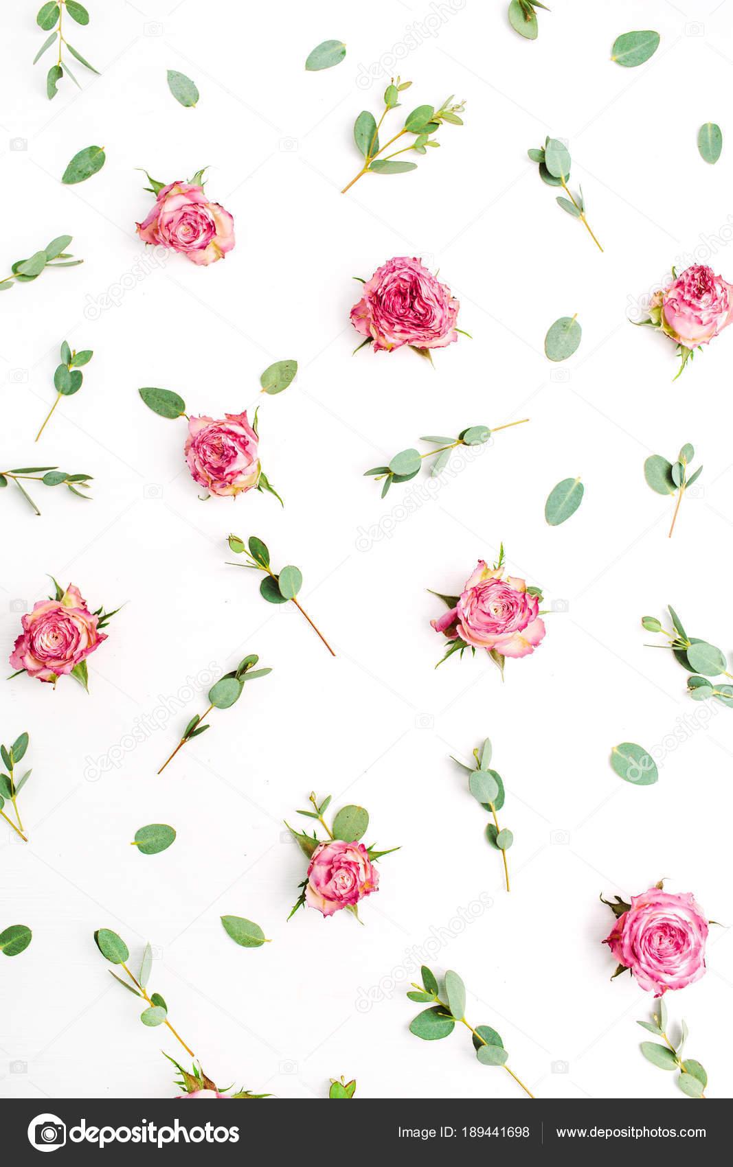 Patron Floral Capullos Rosas Rojas Ramas Eucalipto Sobre Fondo