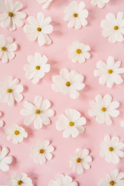 A beautiful pattern with white chamomile, daisies flowers on pale pink background. Floral texture or print. Holiday, wedding, birthday, anniversary concept.  Flat lay, top view.