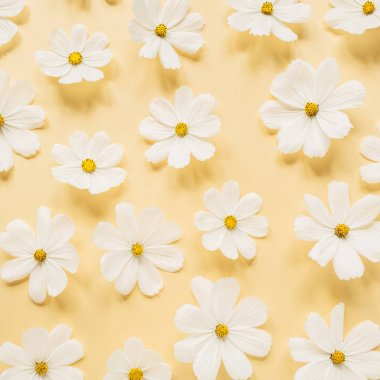 A beautiful pattern with white chamomile, daisies flowers on pale yellow background. Floral texture or print. Holiday, wedding, birthday, anniversary concept.  Flat lay, top view.