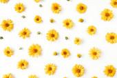 Lapos feküdt sárga százszorszép virágbimbók minta fehér háttér. Top view virágos textúra.