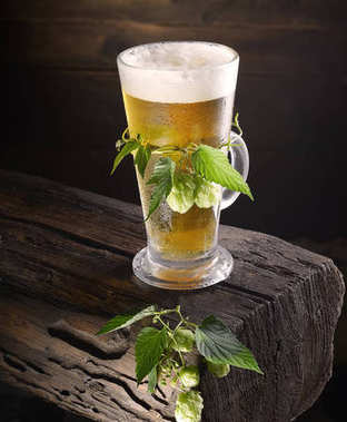 glass of beer with fresh hop