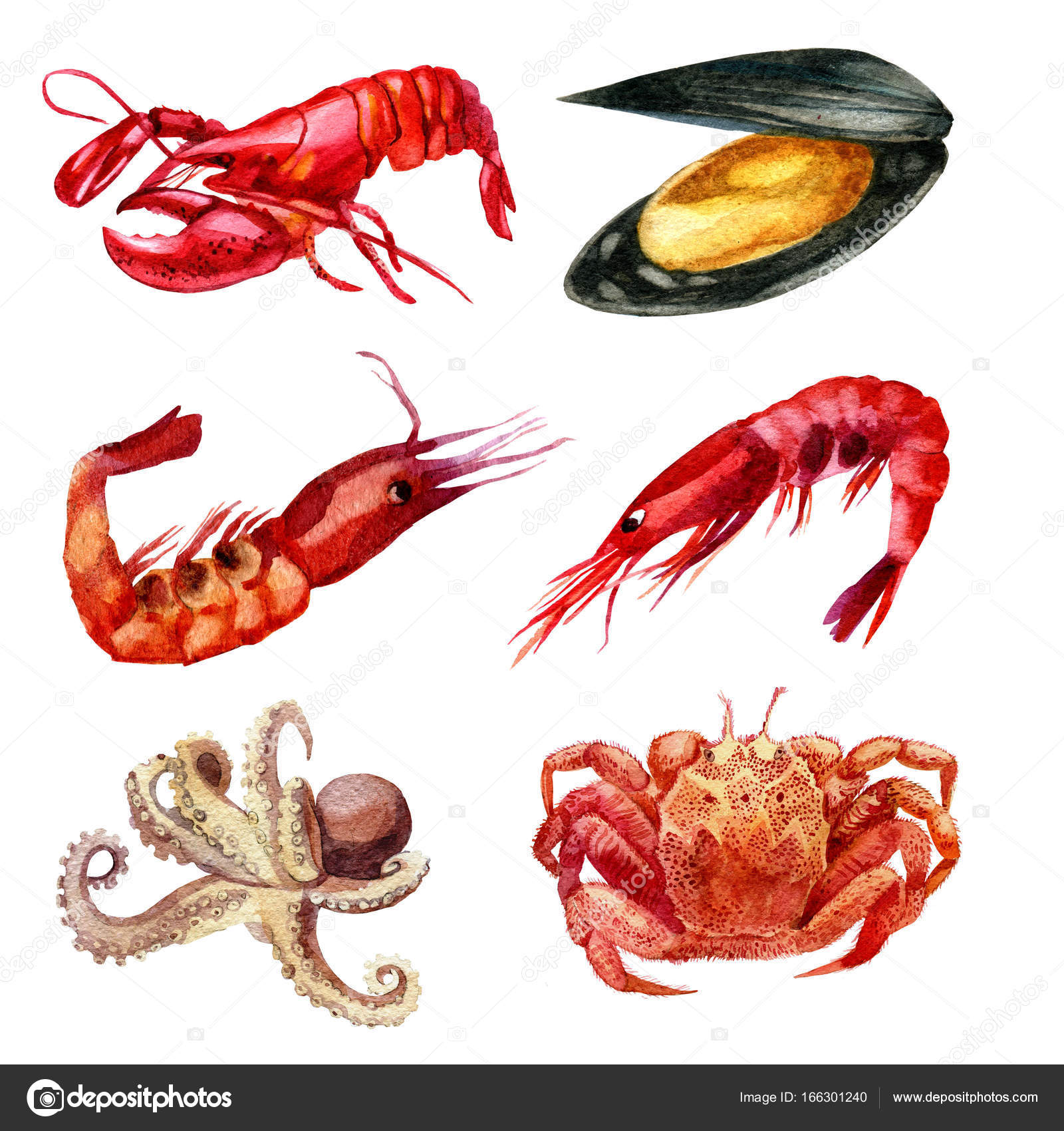 Sulu Boya Resim Deniz ürünleri Kümesi Karides Midye Kanser