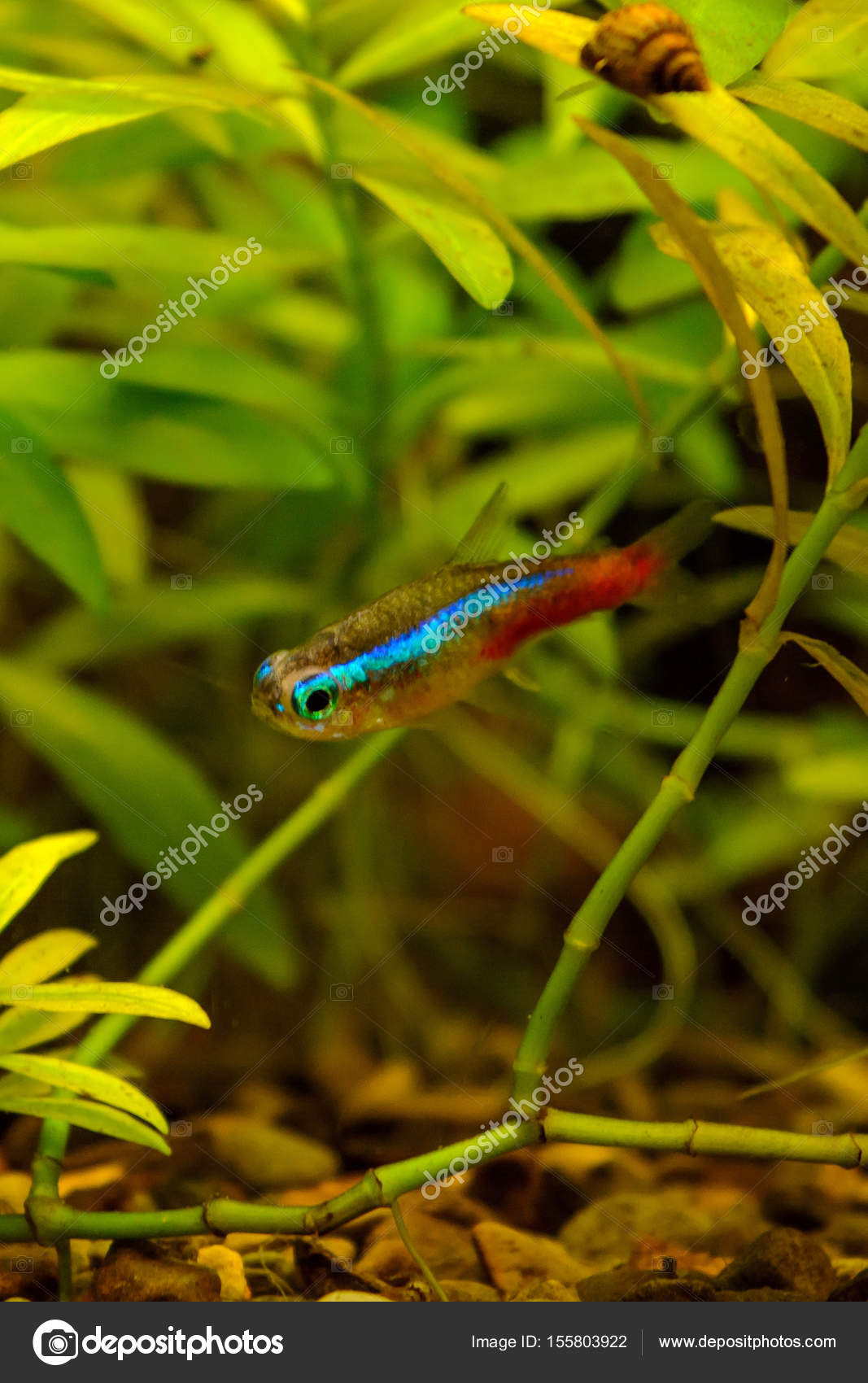Photo of aquarium color fish on green natural background — Stock ...