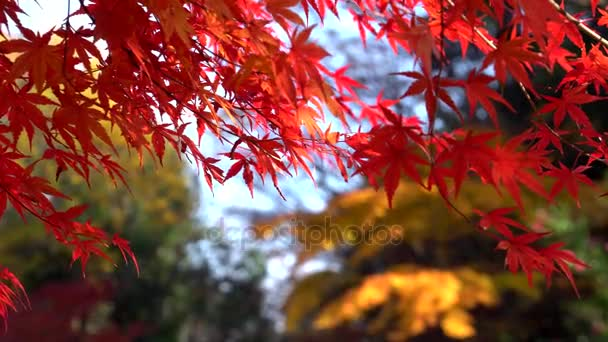 Leaves in a park in Tokyo have changed their colors beautifully
