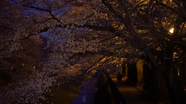 Tokyo, Japan-March 25, 2018: People walk along a river under cherry blossoms or Sakura in full bloom in the night