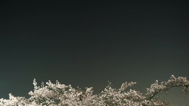 Tokyo, Japan-March 29, 2018: (Time lapse) Cherry blossoms or Sakura in full bloom with the Big Dipper or Charless Wain
