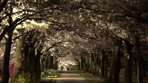 Tokio, Japonsko-Březen 30, 2018: Cesta v parku v plném květu Cherry blossoms nebo Sakura