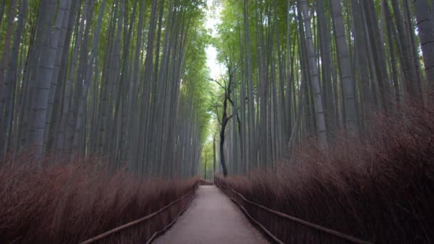 Kyoto,Japan-February 26, 2020: Bamboo grove path in the winter morning in Arashiyama, Kyoto