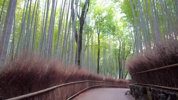 Kyoto,Japan-February 26, 2020: Walking through Bamboo grove path in the winter morning in Arashiyama, Kyoto