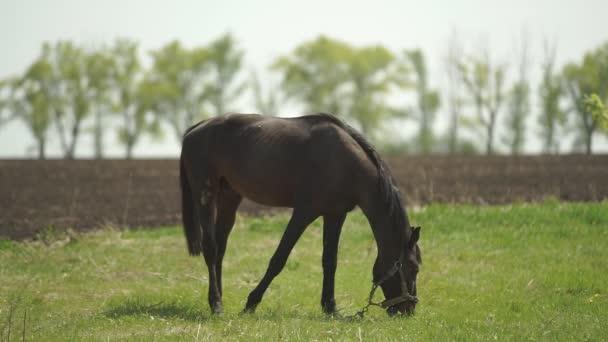das Pferd wird auf die Weide gebracht