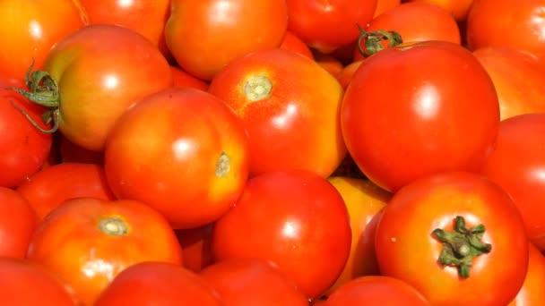 hodně zralých rajčat