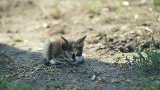 Little kittens in the village