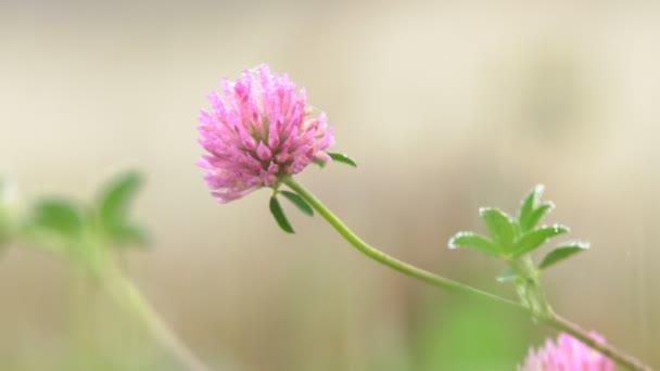 Wild flower in the forest