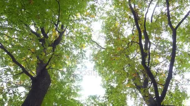 Stromy na podzim Park