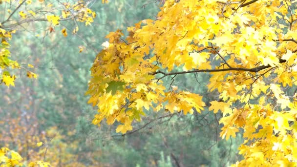 Podzimní krajina rostliny